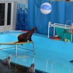 фото выступления северных морских котиков