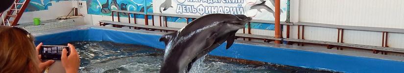 Карадагский дельфинарий. Отзыв.