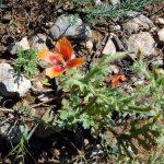 фото диких цветов Крыма