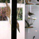 Музей истории природы Карадага