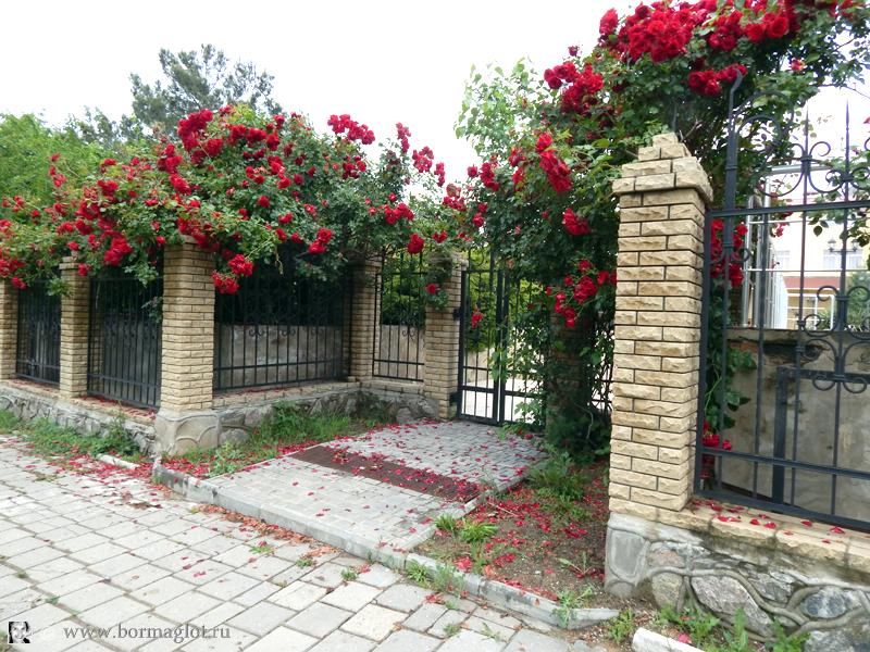 ворота с розами