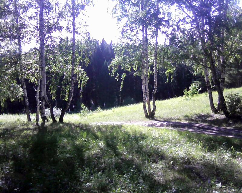 фото в берёзовом лесу