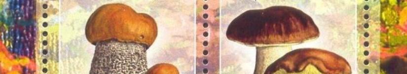 Вроде Руанда, Африка, а грибы наши