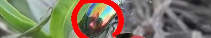 Увидеть своё в отражение в брюшке жука